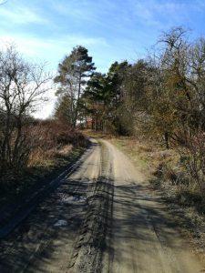 Ritiro Mindfulness Strada nel Bosco