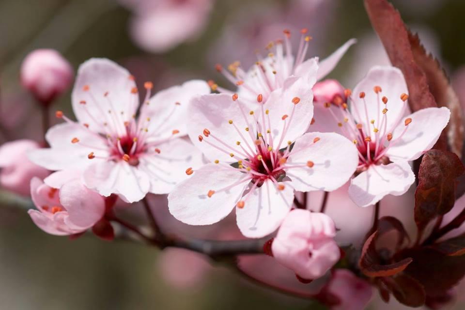 Primavera Mindfulness